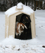 goats in hutch-1