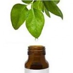 Essential Oils: Tea Tree