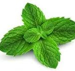 Essential Oil: peppermint