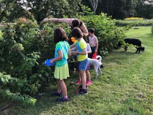 13. kid garden berry pickers